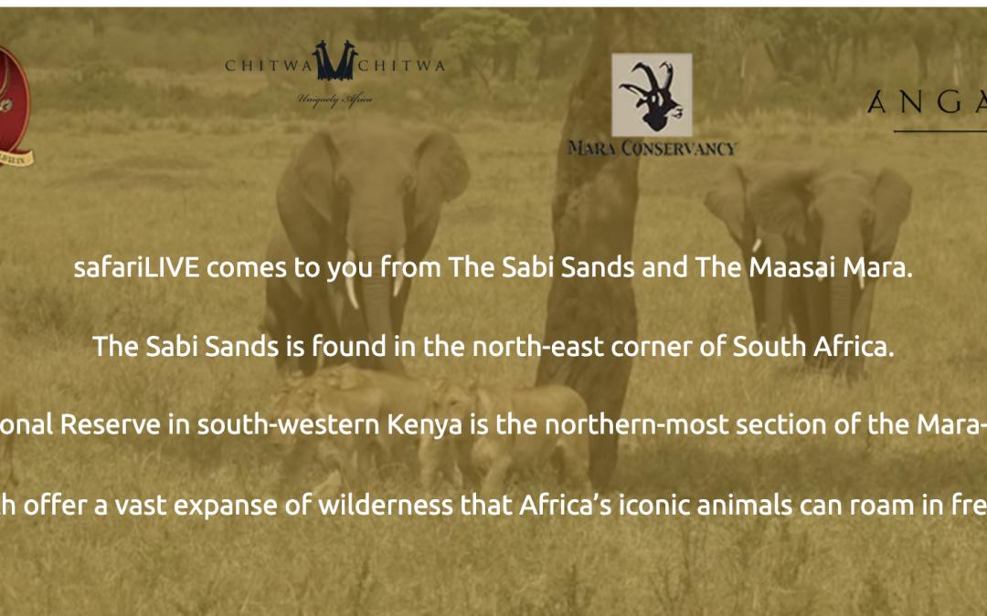 Wild Earth, Safari en vivo